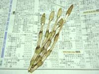 20060305_01